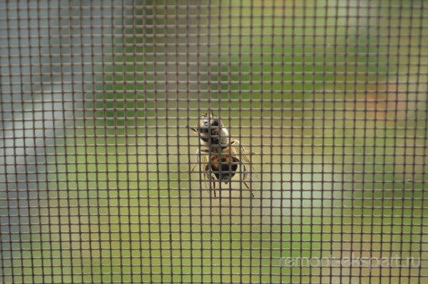 Москитные сетки от вредителей